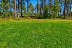 Lancement de terrain de camping de forêt de pin photographie stock