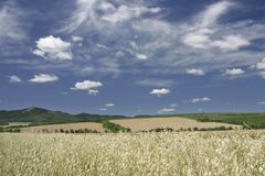 Land. Land in summer and cereals Royalty Free Stock Photography
