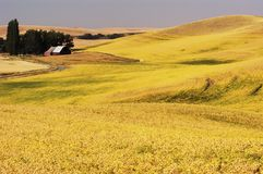 Land 3 van Palouse Royalty-vrije Stock Afbeeldingen