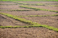 Land agriculture soil and grass Stock Images