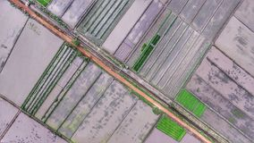 Land Area of Rias Rice Field Royalty Free Stock Image