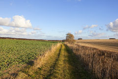 Land bridleway Lizenzfreies Stockfoto