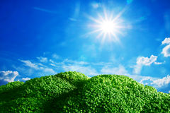 Land of broccoli under blue sunny sky Royalty Free Stock Images