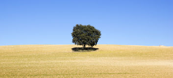 Land of cereal with a tree Royalty Free Stock Photos