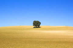 Land of cereal with a tree, Spain Stock Images