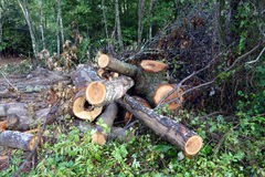 Land clearing Royalty Free Stock Photography