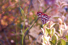 Land of Colorful Wonders2. A colorful butterfly standing in the light Stock Images