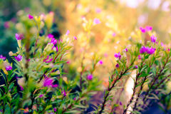 Land of Colorful Wonders. Little pink flowers in the shadow and sunlight Royalty Free Stock Images