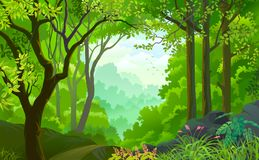 A live beautiful green jungle with lots of trees, flowers and plants. A land covered with big trees, branches, green leaves, rocks, dirt and flowers in spring Stock Image