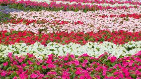 Land covered by flowers Royalty Free Stock Image