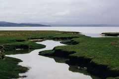 Land Covered by Green Grass Surrounded by Body of Water Stock Photo