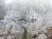 Land covered in snow. Beatiful scenery of trees and bushes covered in winter frost Stock Photography