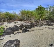 Land covered with white sand with few trees around and some rocks Stock Images