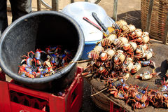 Land crabs for sale. In the Kejetia market in Kumasi, the largest market in Western Africa with a myriad of items for sale. It has over 10 thousand stalls Stock Photo