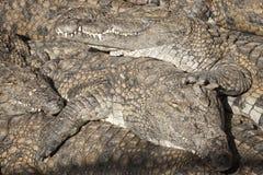 Land of crocs Stock Photos