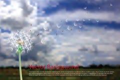 Land dandelion Stock Photography