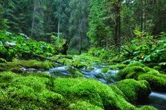 Land des Grüns Lizenzfreies Stockfoto