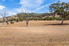 Land door droogte in Hoger Hunter Valley wordt beïnvloed, NSW, Australië dat stock afbeeldingen