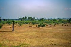 Land door overgrazing wordt beïnvloed die stock foto's