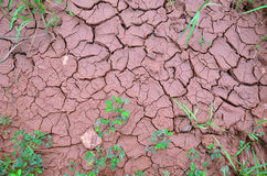 Land Dry Background Stock Images