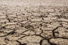 Land with dry. And cracked ground. Desert Stock Images