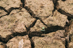 Land with dry. And cracked ground. Desert Royalty Free Stock Photos