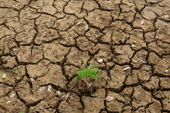 Land with dry. And cracked ground. Desert Stock Photography