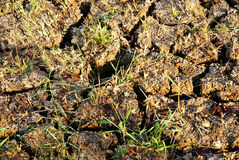 Land with dry cracked ground stock photography