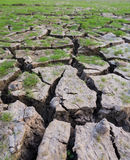 Land with dry cracked mud ground Stock Image