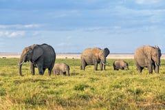 Land of elephants Royalty Free Stock Image