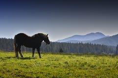 Land en paard royalty-vrije stock foto's