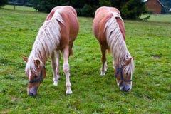 Land en paarden royalty-vrije stock foto