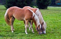 Land en paarden royalty-vrije stock afbeelding