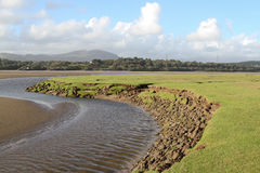 Land erosion. Land, saltmarsh, next to an esturary being eroded by water Royalty Free Stock Photos