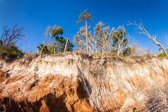 Land erosion. Natural erosion along the shoreline on Big Talbot Island in Jacksonville stock image