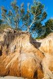 Land erosion. Natural erosion along the shoreline on Big Talbot Island in Jacksonville Royalty Free Stock Image
