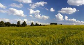 Land för grönt bälte för stads- miljö Arkivbild