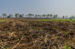 Land für Zuckerrohrplantage Stockfoto