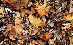 Land of Fall Colored Leaves Stock Images