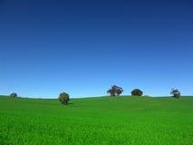 Land-Feld stockfoto