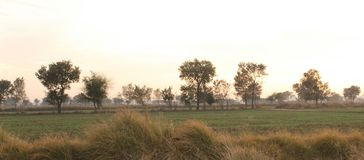 Land and fields of Punjab. An evening in the country land of Punjab with remarkable fields Stock Photography