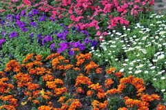 Land of flowers sea Royalty Free Stock Photo