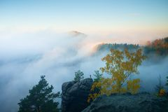 Land of fog. View through branches to dreamy deep misty valley within daybreak. Foggy and misty morning landscape Stock Images