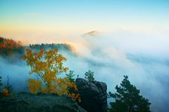 Land of fog. View through branches to dreamy deep misty valley within daybreak. Foggy and misty morning landscape Stock Photography