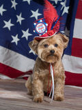 Land of the Free Patriotic Dog. Patriotic Dog wearing red, white and blue top hat with button that says Land of the Free. Flag background. July 4th, Memorial Day stock image
