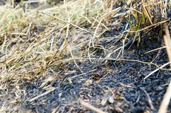 Land with grass burned by fire. Fires, burning brush, devastate the woods and leave coal and ash, destroying nature and the surrounding ecosystem stock photo