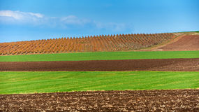Land and green fields in autumn Royalty Free Stock Photography