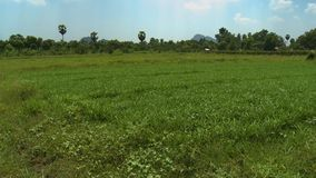 Land of green grass and freshness. A hand held, medium shot of a land of green grass and tall tress abounding with freshness during the sunny day stock footage