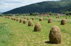 Land haycock Stock Image