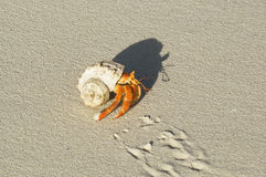 Land Hermit Crab. Close up color picture of hermit crab crawling through white sandy beach royalty free stock photo